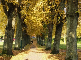 The avenue on the Greencroft in Autumn 2010 | Photo: Pam Wall